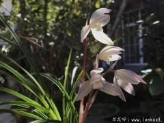 今日问题:新买的兰花怎么上盆 图片