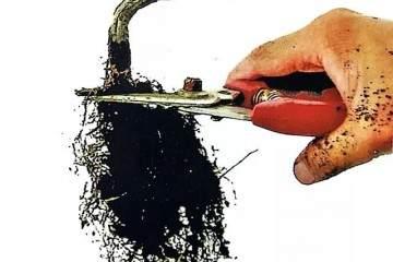 图解 小品榆树盆景的上盆全过程