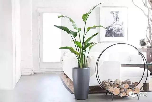 花卉移栽到盆钵中继续栽培,称为上盆