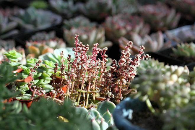多肉植物上盆种植的经验总结