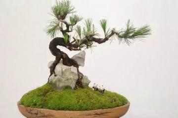 什么是附石式树桩盆景?