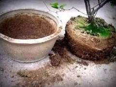 养花不用常换土 只需加点这3种废渣 旧土变新土