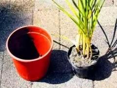 怎么样给花换盆换土?3个注意事项 图片