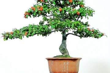 学会盆栽换土 不怕植物不开花 烂根问题也会远离