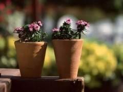 养花是时候该换盆了 手把手教你给花换盆