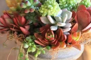 多肉植物怎么换盆的7个方法 图片