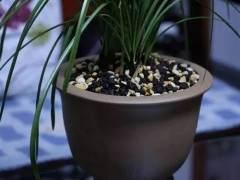 给花卉换盆的6个操作步骤 图片