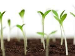 几种不同植物所需培养土配制方法如下