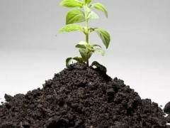 花卉换盆的季节 我们来了解一下花土!