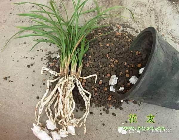 给盆栽植物翻盆的4个步骤