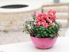 花盆换盆容易死?这样给植物换盆 枝繁叶茂