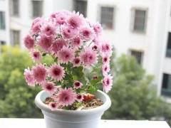 花卉换盆的具体步骤和注意事项 图片