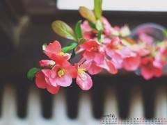 什么季节适合给花卉换盆 图片
