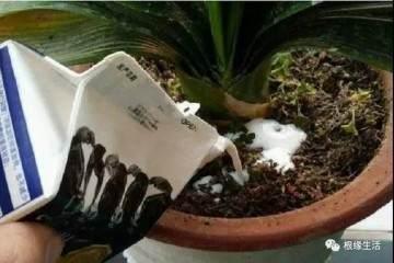 一招就能解决盆栽土壤板结 不需要换盆换土