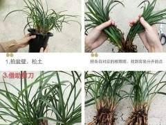 春季动兰花盆可分为 1.翻盆  2.分盆 3.换盆