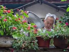 为什么你家的花换盆就死?千万别乱换了!