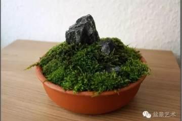 苔藓盆景怎么制作 每天要喷水多次