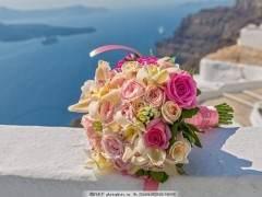 花卉植物换盆要注意的6个事项 图片