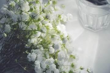 满天星花卉每隔1-2年之后需要及时进行换盆