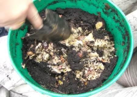 花卉植物怎样换盆才能更快恢复4