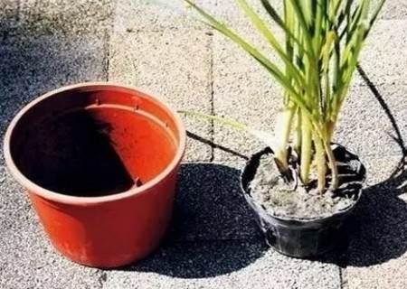 如何给植物换盆图解