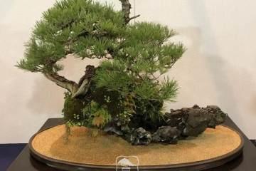 日本盆景 到底有哪些值得我们学习的地方?