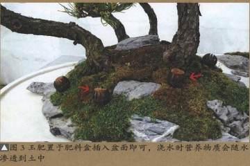 树石盆景施肥特别要注意以下6点