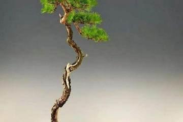 民国期间 文人树盆景的历史