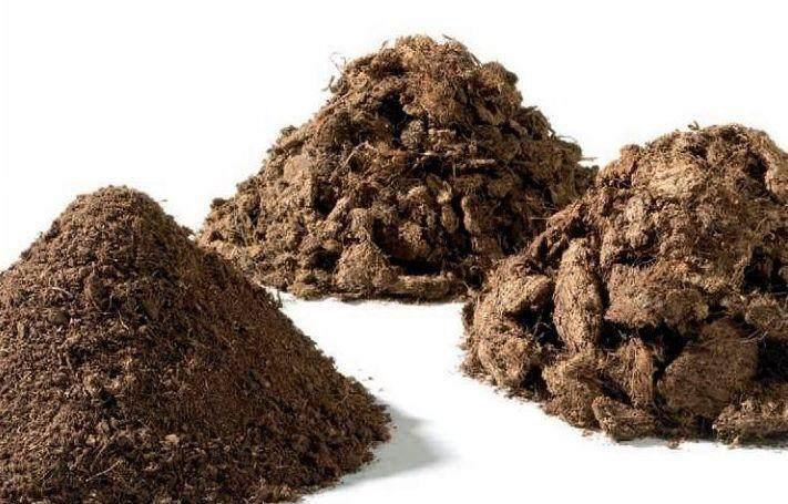 下山桩栽培的土壤配比经验