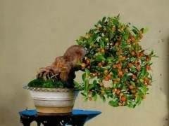 金豆下山桩的种植方法 怎么养护 图片