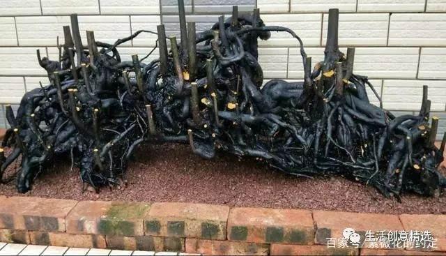 难得一见的丛林金弹子下山桩 给2万都不卖!