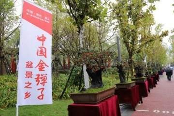 贵州遵义第一届交旅投杯金弹子盆景展