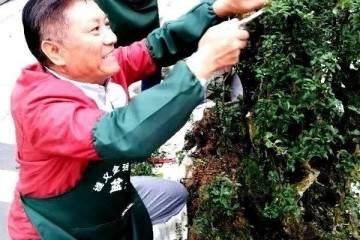 图解 刘传刚表演雨林式盆景的全过程