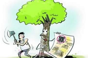金弹子盆景树如此金贵 砍一颗被判一年刑!