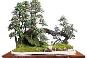 中国金弹子盆景艺术之乡——永川考察之旅