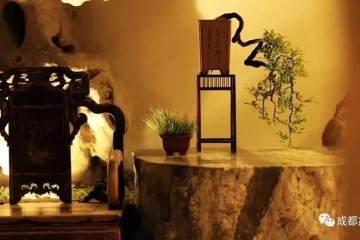 川派盆景公益大讲堂:嫁接在盆景制作上的应用