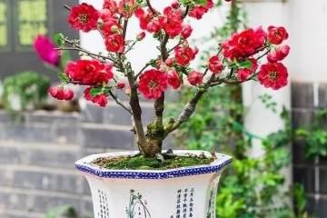 寒冬腊月花盆景开不断 花开200天