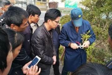社区黄杨盆景制作培训班