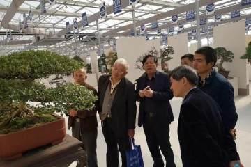六个一助推崇明黄杨盆景产业发展