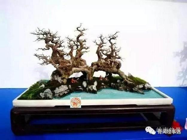林南老师是一位资深的岭南盆景玩家