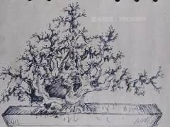 图解 赤楠丛林下山桩的造型设计图片