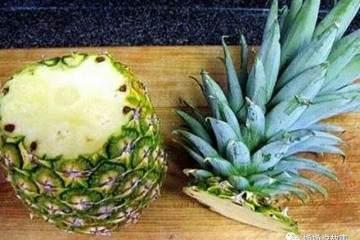 菠萝树盆景怎样插穗移栽与扦插繁殖