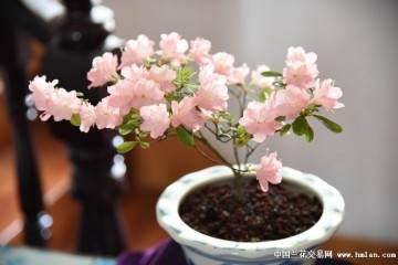 浙江:花甲农村老太热衷经营盆景小天地