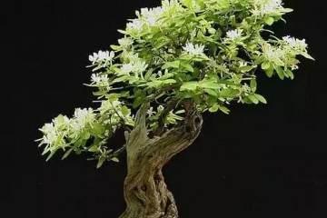 花卉盆景病虫害防治的原则