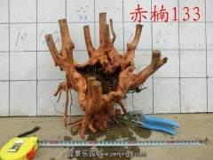 怎么采挖赤楠下山桩 如何种植 图片