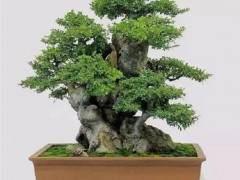 榆树下山桩发芽怎么养护 这7个方法 图片