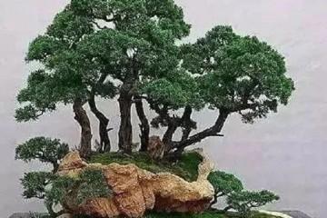盆景土上的苔藓是怎么制作的?