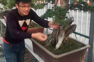 第二届上海国际青年盆景论坛嘉宾 时畅