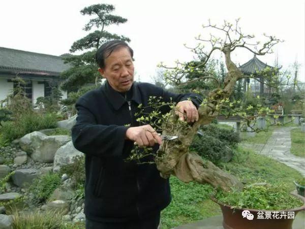 川派盆景大师的艺术人生 - 胡世勋