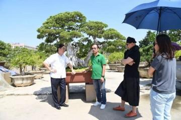 越南新闻网大篇幅报道鸿江盆景园